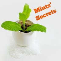 mints-secrets.jpg