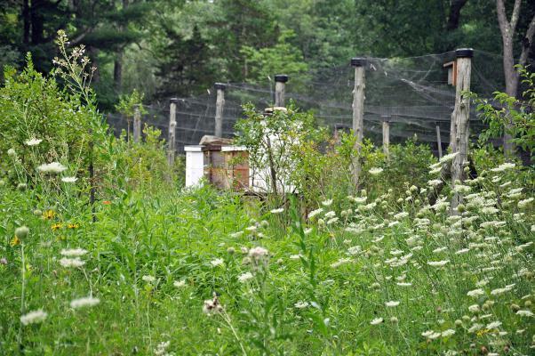 Pom's Cabin Farm13.jpg