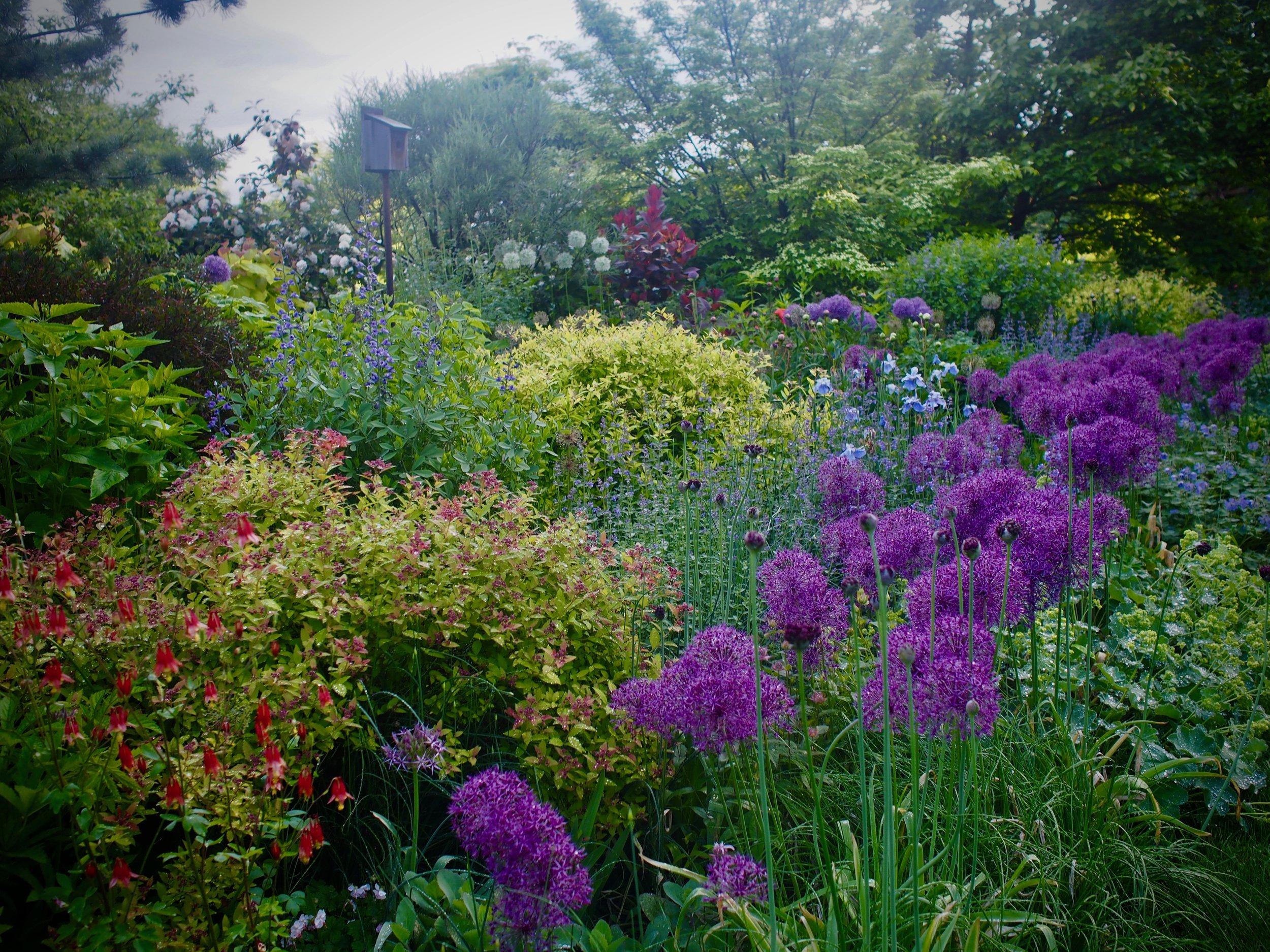 May Perennial Border.jpg
