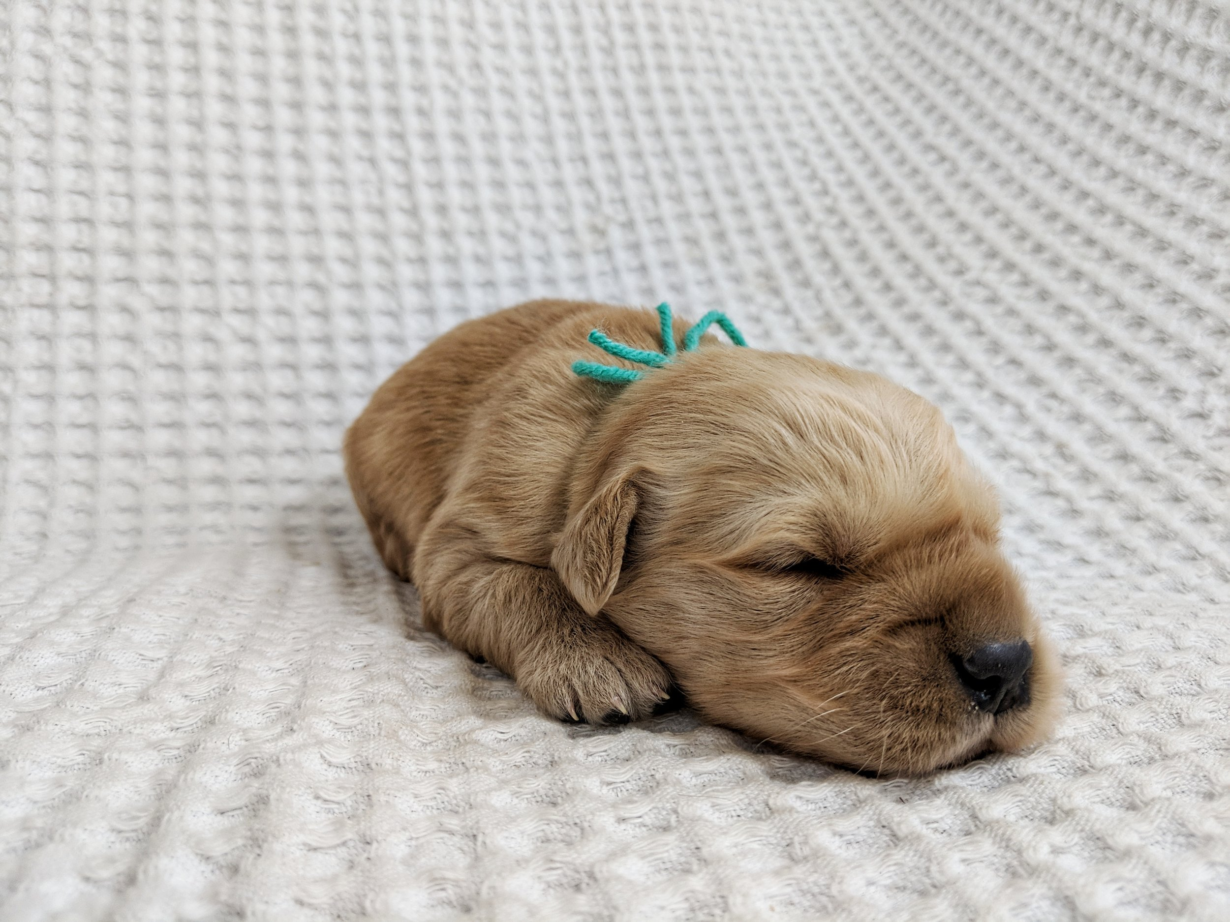 Two Weeks Old
