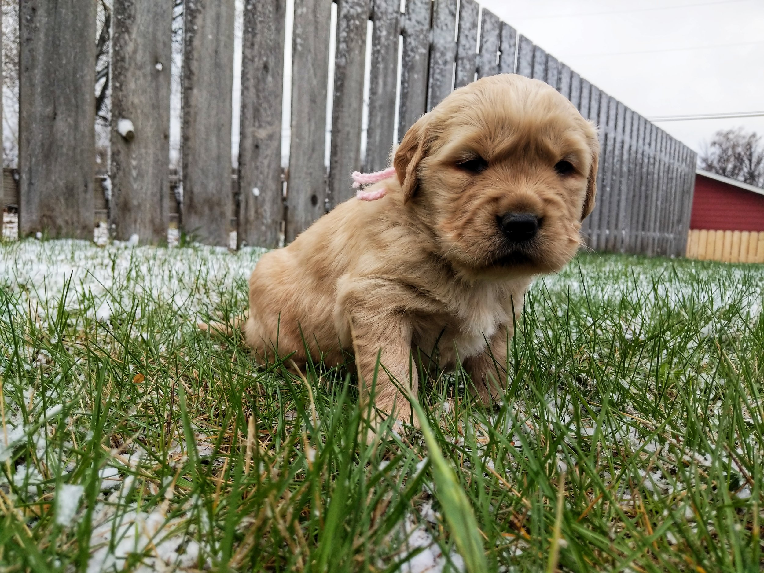 Four Weeks Old