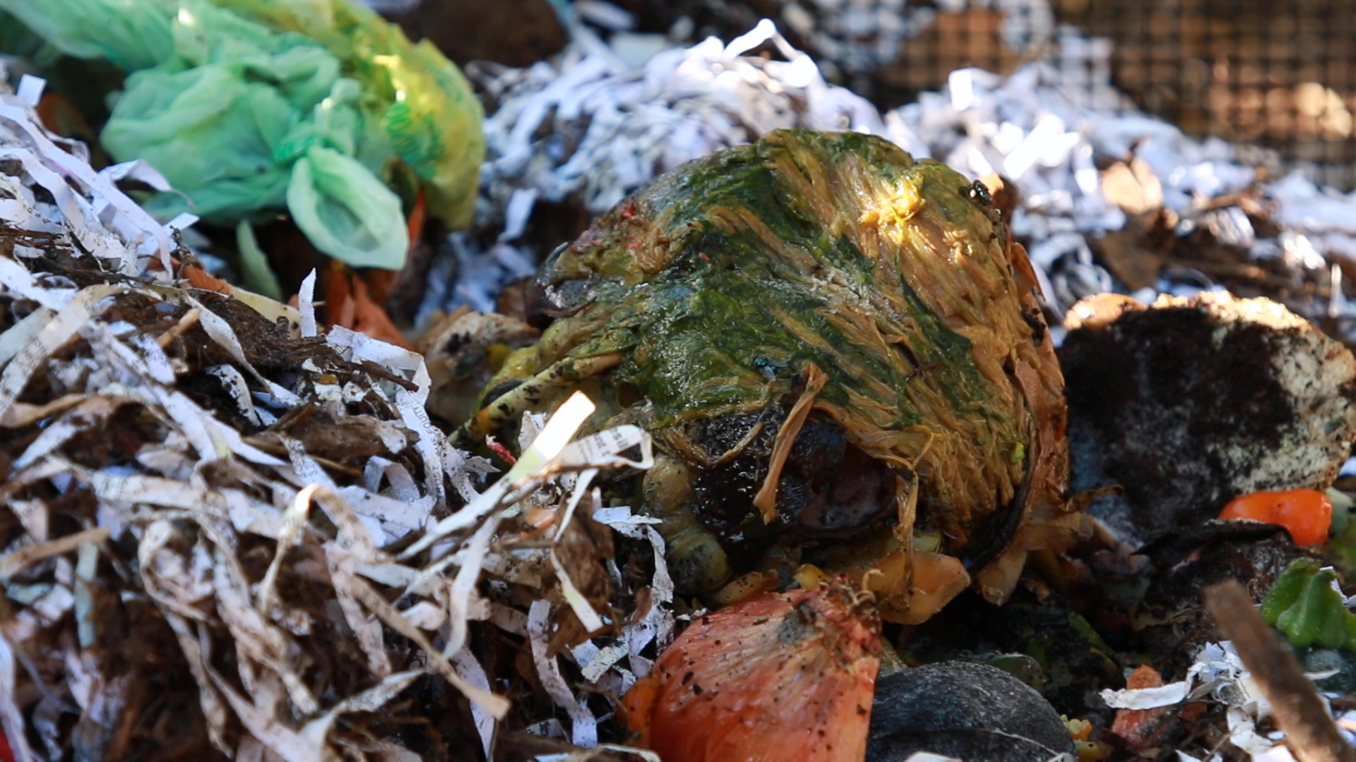 Food waste that was diverted from landfills to fight soil degradation. Photo by: Justin Dalaba