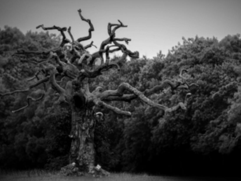 4 - The Dead Tree.jpg