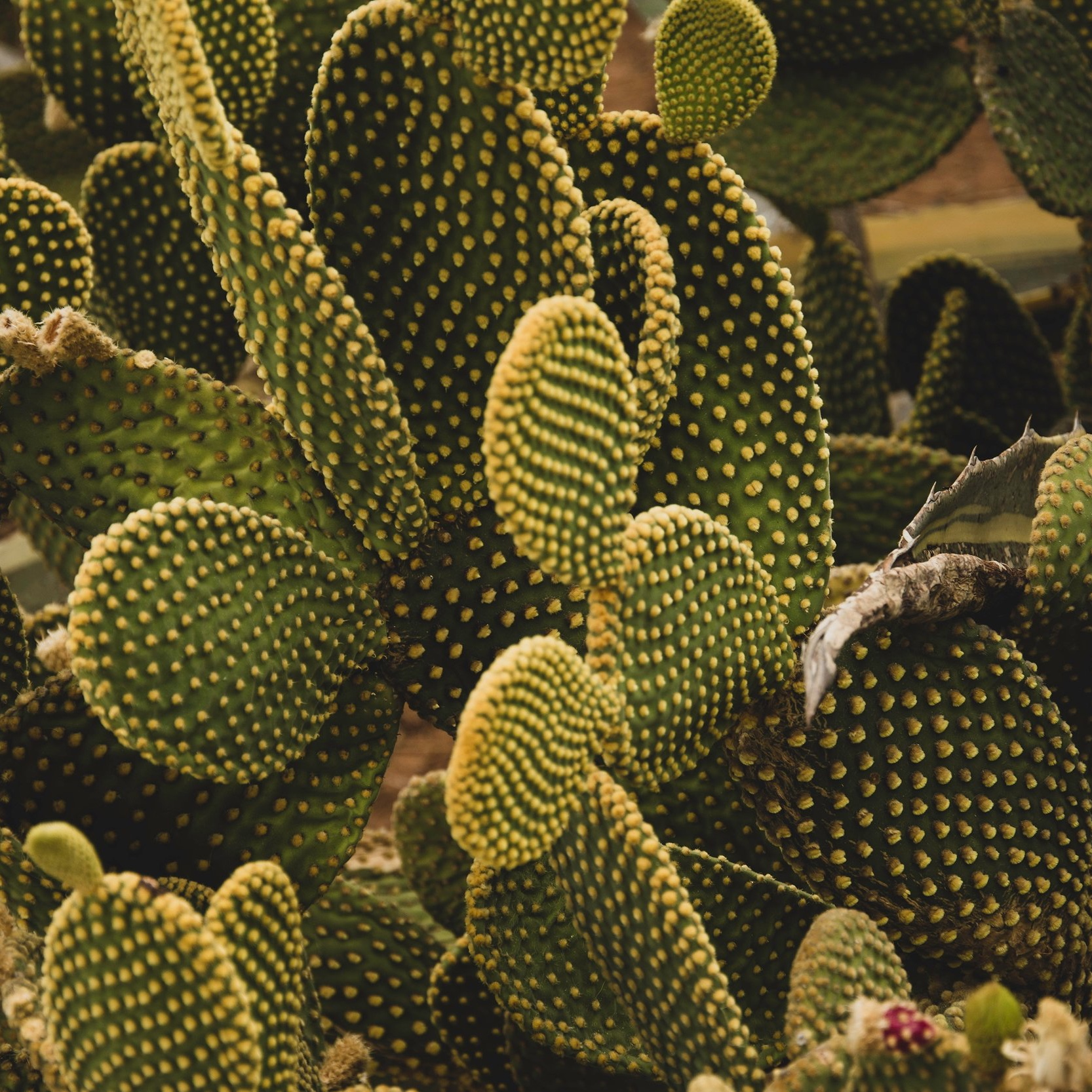 Space Coast Cactus Farm - Some sharp additions for your garden.
