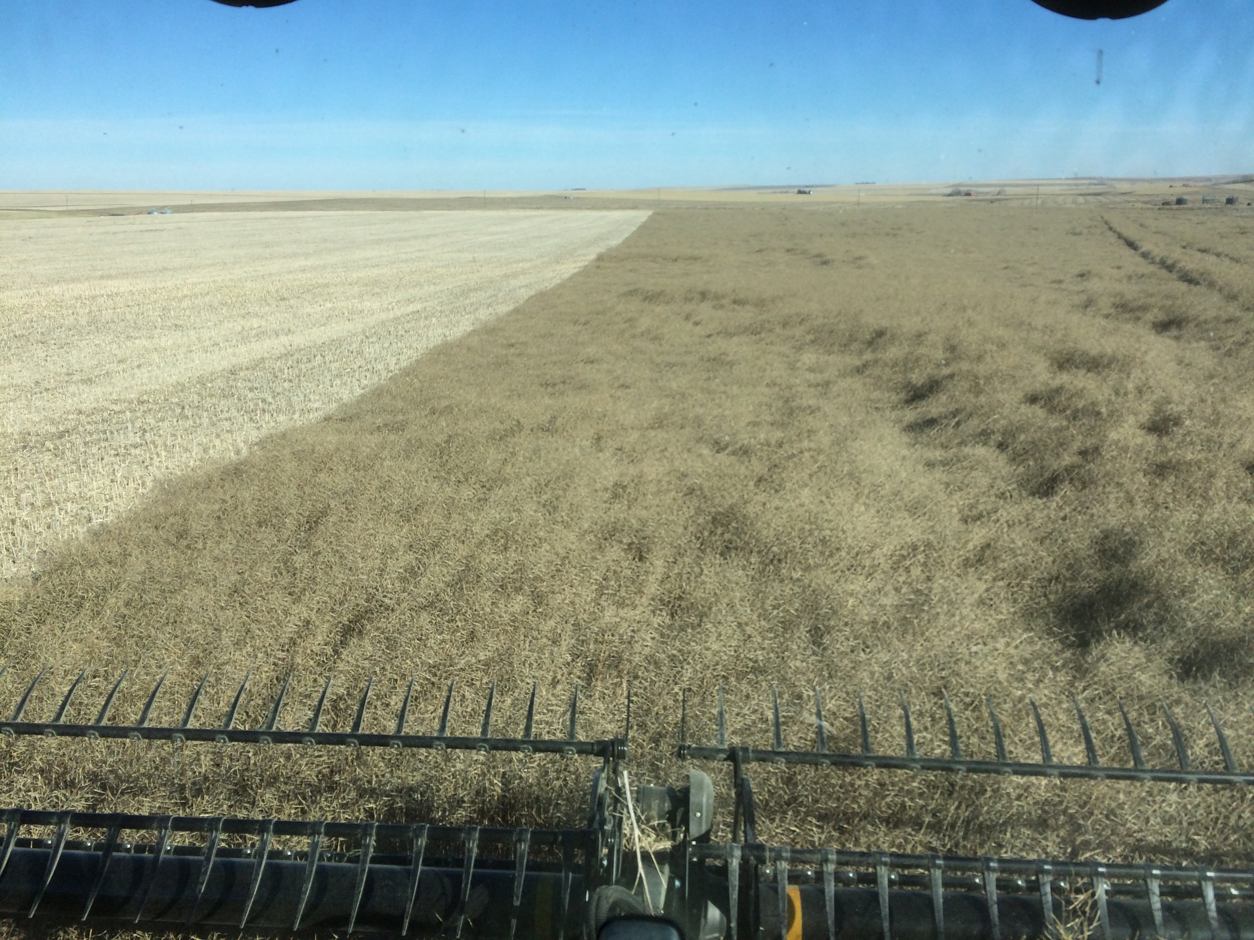 Harvesting canola at Three Hills, AB (November 2018)