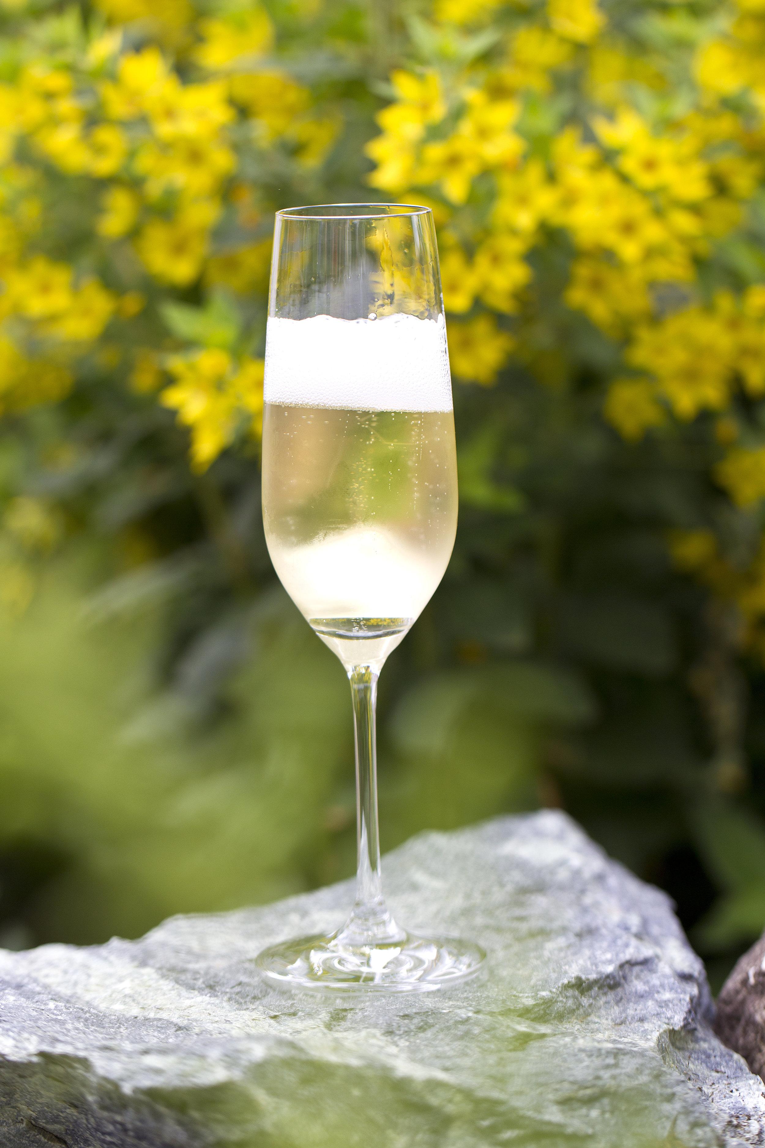 Secco Frizzante weiß GLERA VENEZIE IGT - Unser hochwertiger SECCO ist ein wunderbarer Apéritif, das perfekte Getränk für unbeschwerte Partys und passt nahezu zu jedem Anlass. Die ehemals als Prosecco-Traube bekannte Rebsorte, heute Glera genannt, gehört zu den ältesten Sorten der berühmten Region Venetien.Die WeinherstellungDie perfekt gereiften Glera-Trauben werden Ende September geerntet und nach der traditionellen Methode zu hoch aromatischem Grundwein verarbeitet. Gemäß dem Charmat-Verfahren erfolgt die Gärung auf der Hefe in großen Stahltanks und der so entstandene FRIZZANTE wird behutsam und ohne Verlust der natürlichen Kohlensäure in 20l-Fässer abgefüllt.Der WeinStrohgelber Glanz und fruchtig-fein im Duft. Knackig frisch, trocken aber dennoch überaus fruchtig präsentiert er sich im Glas. Die wunderbar ausbalancierte Säure macht ihn zu einem sehr angenehmen Appetitanreger.Empfohlene Trinktemperatur: 8-10° C.Alkohol Vol.: 11,0 %
