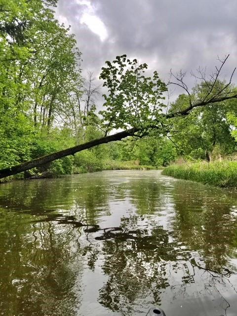 Mosquito Creek.jpg