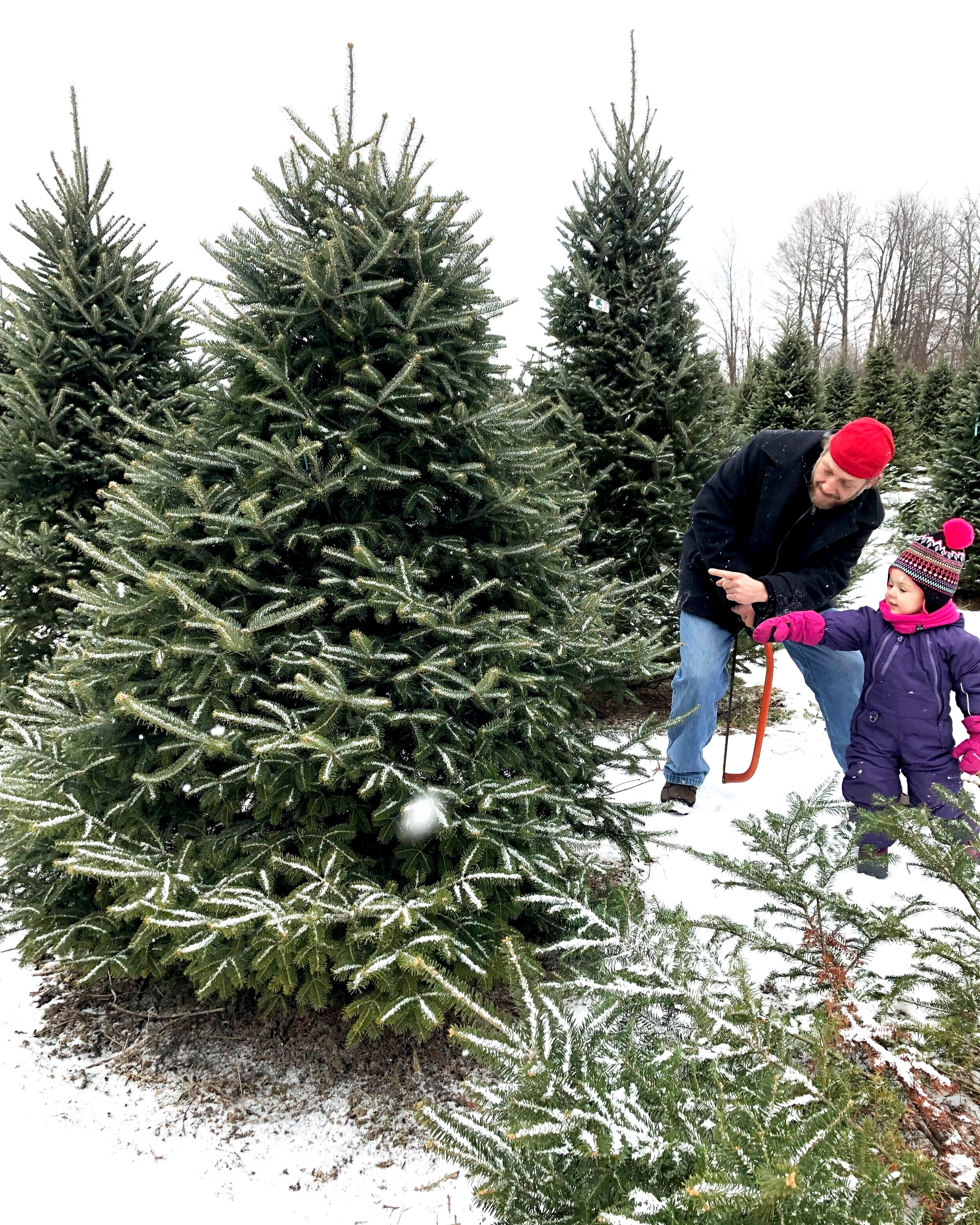 2019 Ottawa Christmas Tree Farms Update Skippy Jade