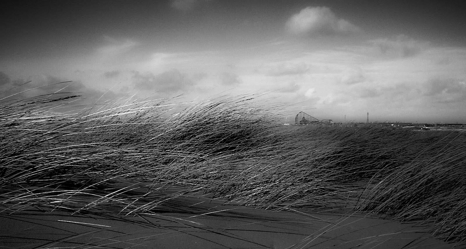 sand-dune-sea-grass-with-blackpool-tower-and-pleasure-beach_8089110684_o.jpg
