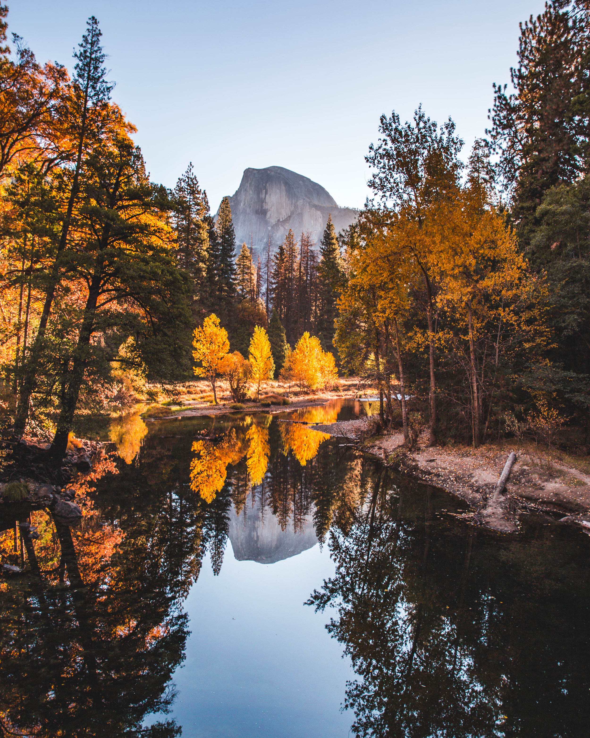 Half dome peaking behind some fall foliage at sunrise.