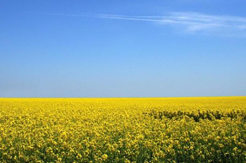 mustard-field.jpg