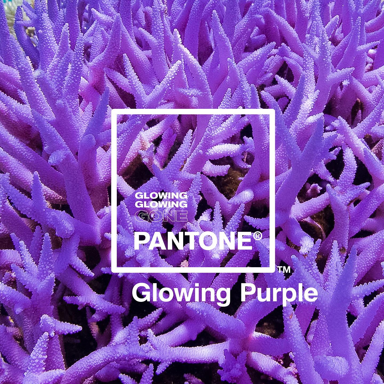 Pantone_Glowing_Purple_gallery.jpg
