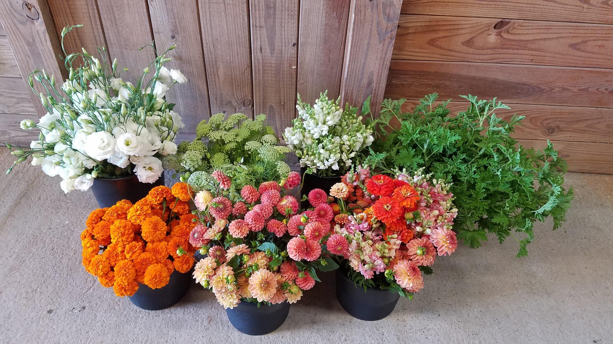 flower-buckets-orange-white-green-colors.jpg