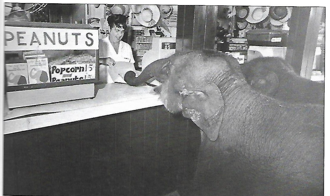 ZOO CONCESSION STAND.jpg