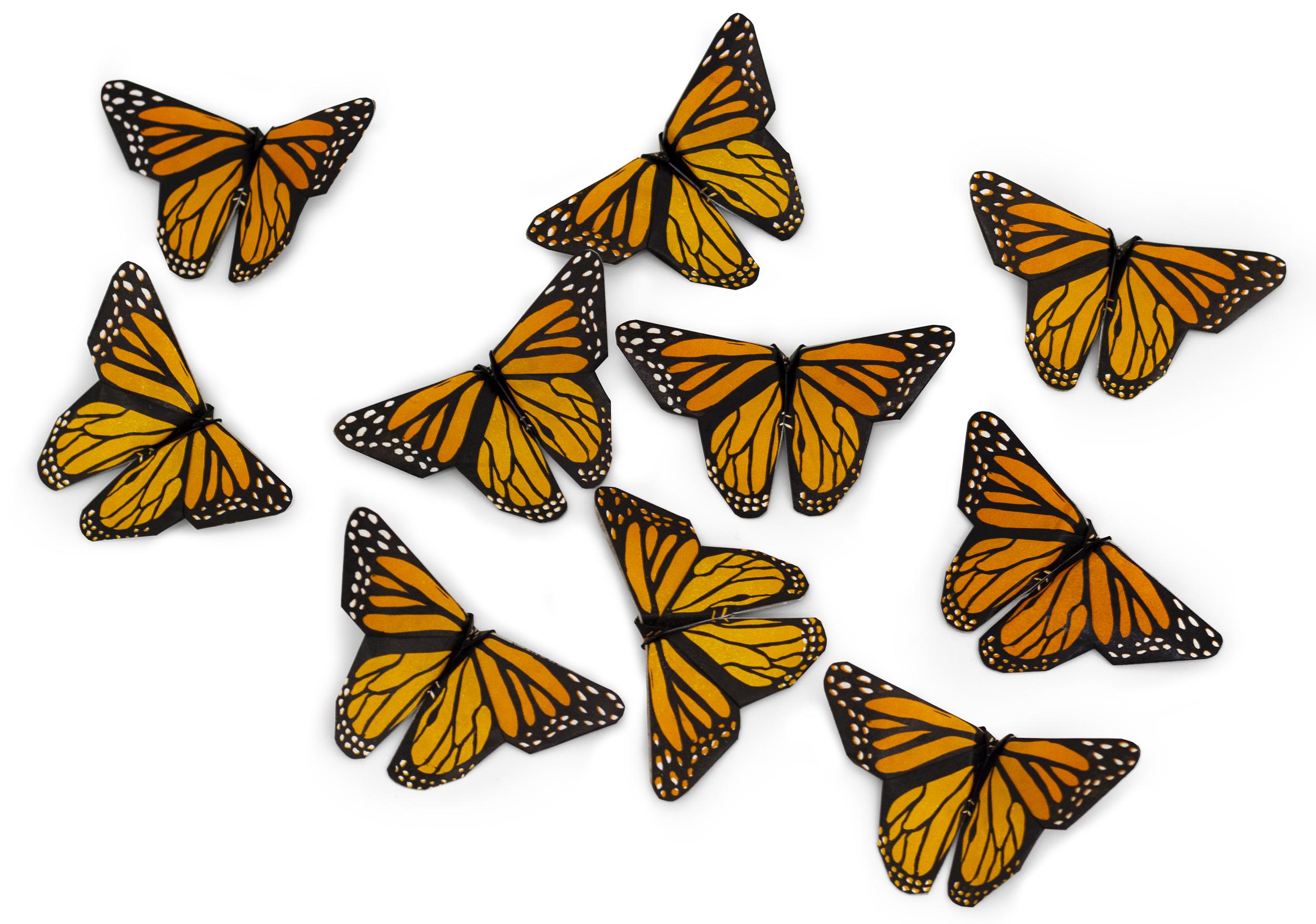Monarchs 1_webscrop.jpg