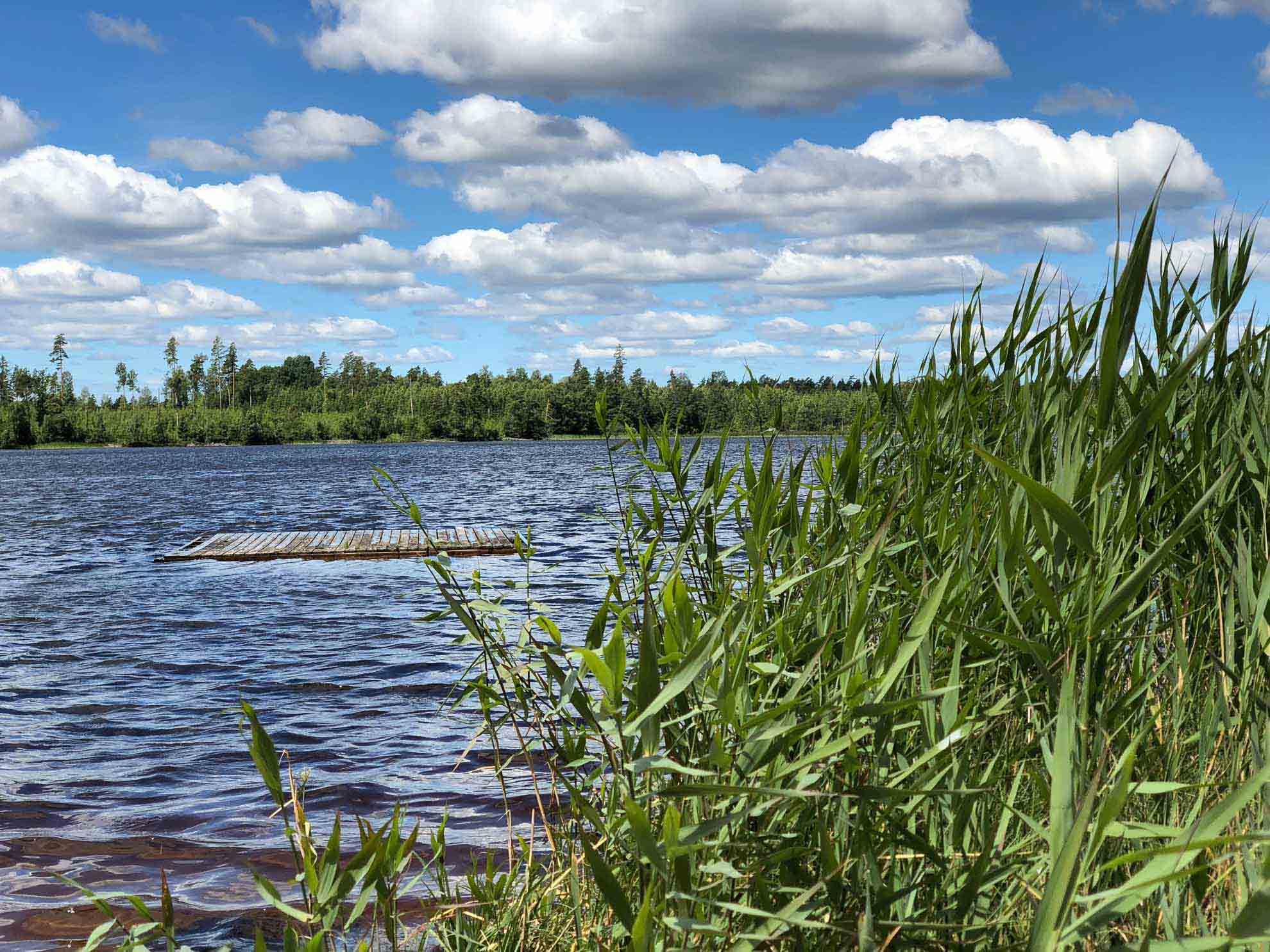Die Ufer sind gesäumt von Schilfgürteln …