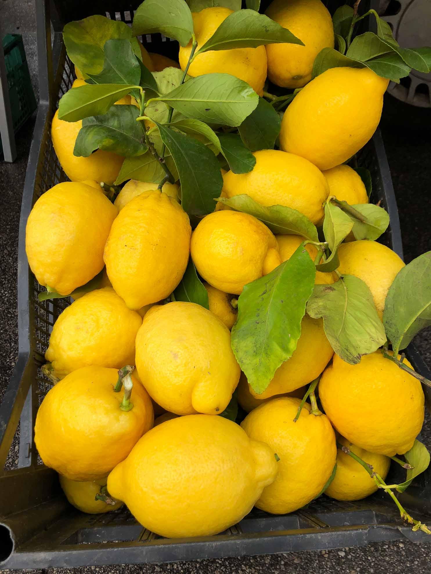 ... entdecken wir auch wieder die Amalfi-Zitronen.