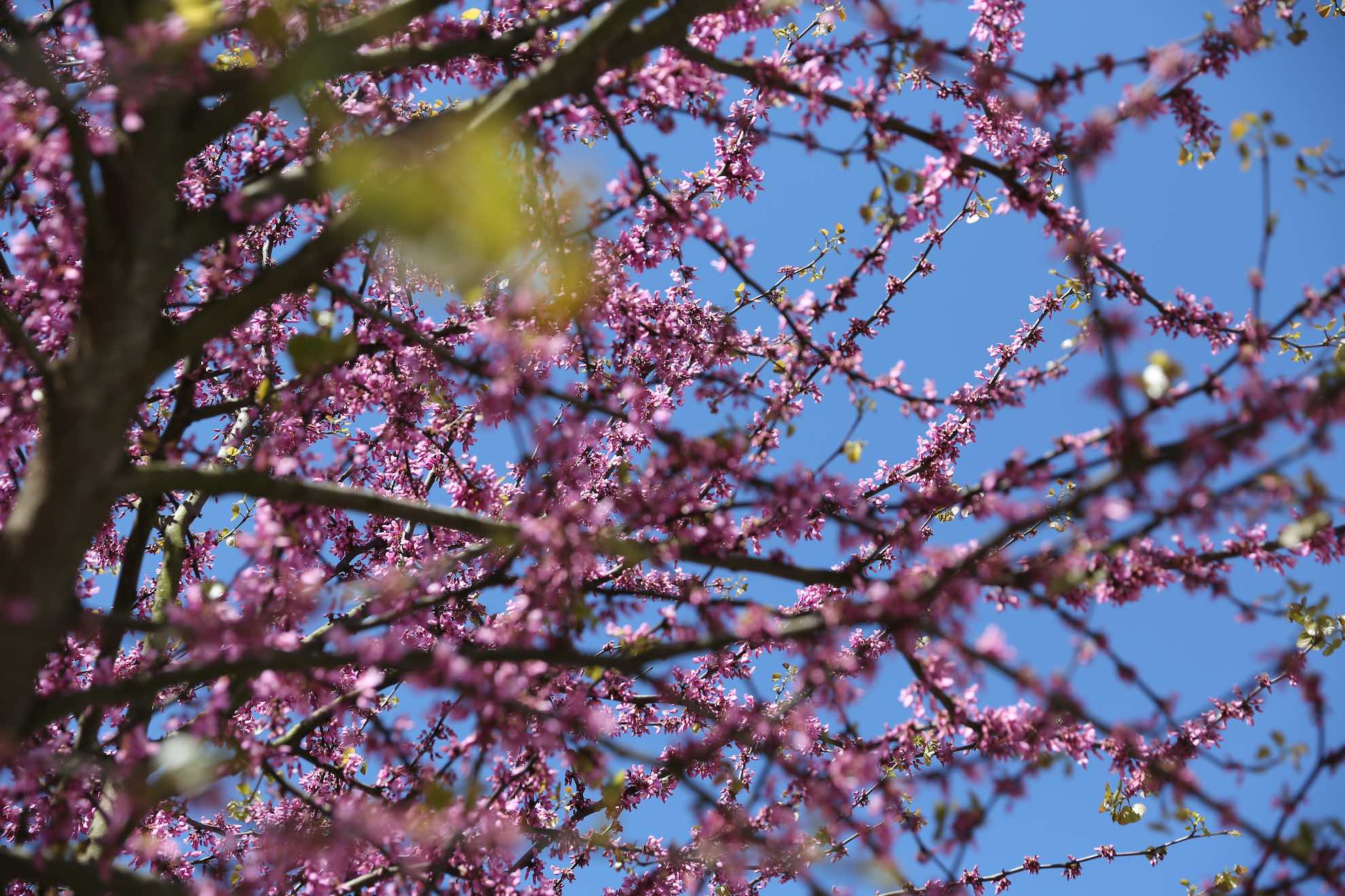 Der Frühling kündigt sich an und es wird milder