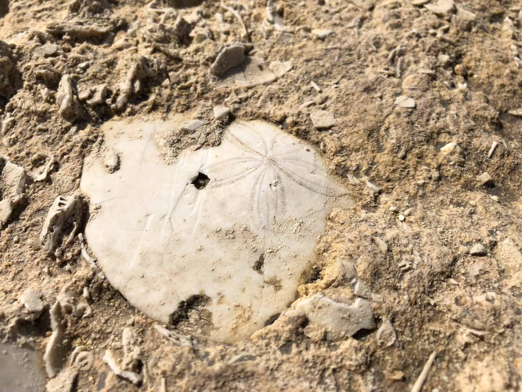 ... und besondere Funde – hier ein Teil einer Muschel.