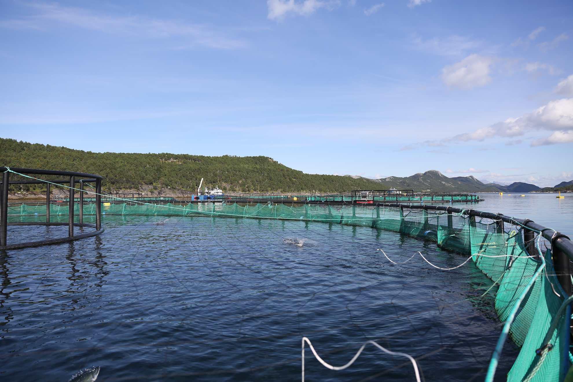 """Eine typisch norwegische """"Laks-Farm"""", in der Lachs gezüchtet wird."""