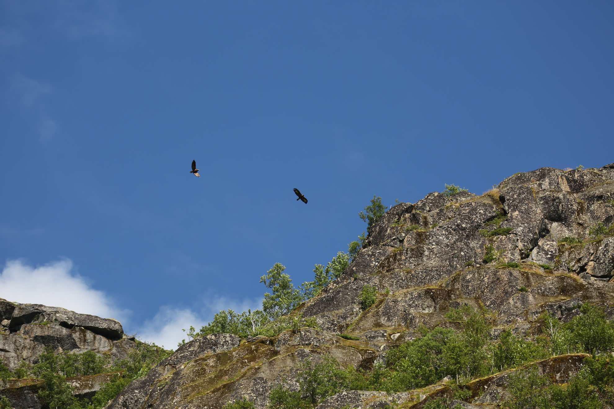 Im Trollfjord sehen wir Seeadler, ...