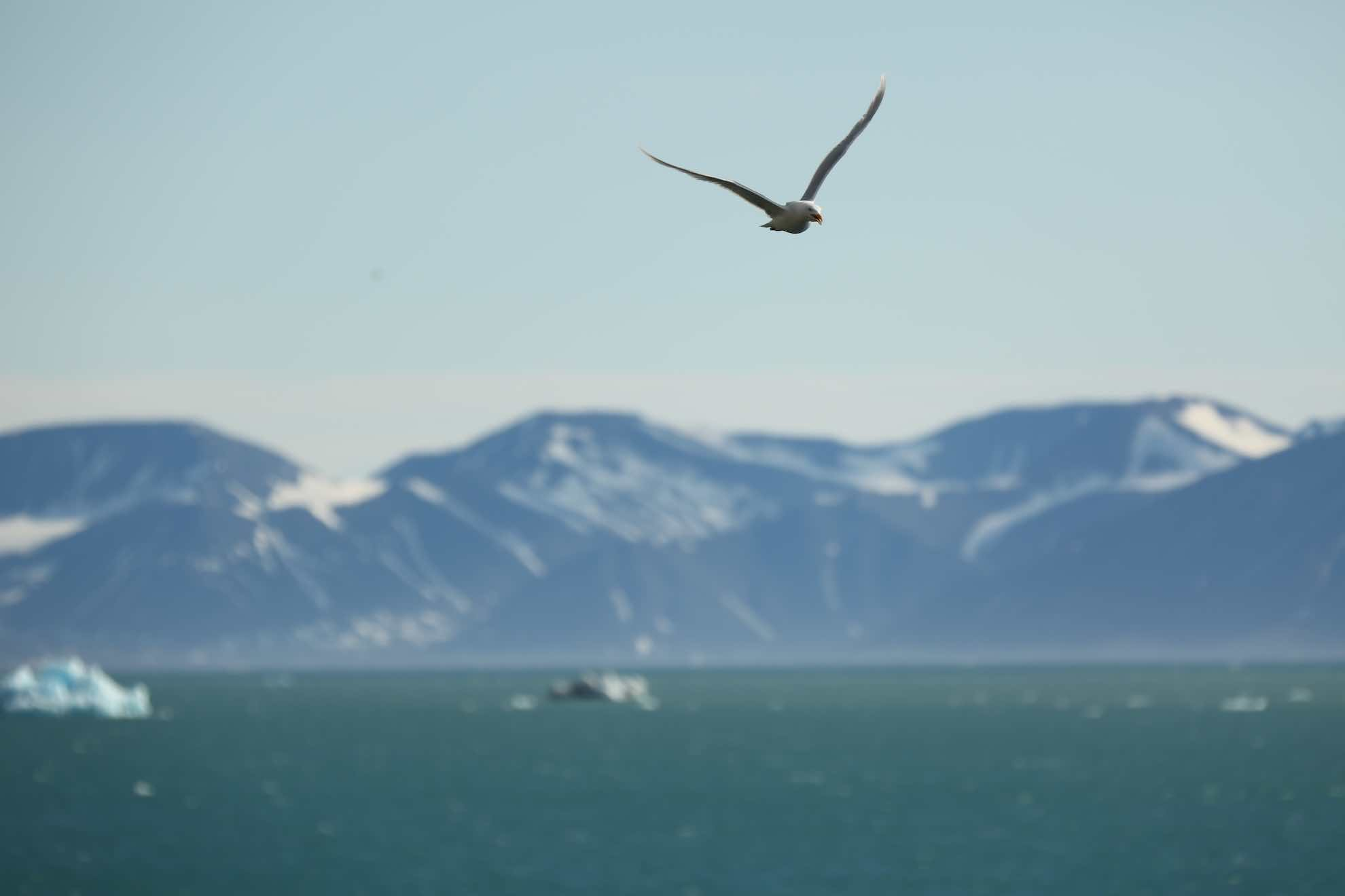Gleichzeitig markiert die Erkundung des Liefdefjords den Scheitelpunkt der Spitzbergen-Reise. Bald geht es wieder Richtung Süden.