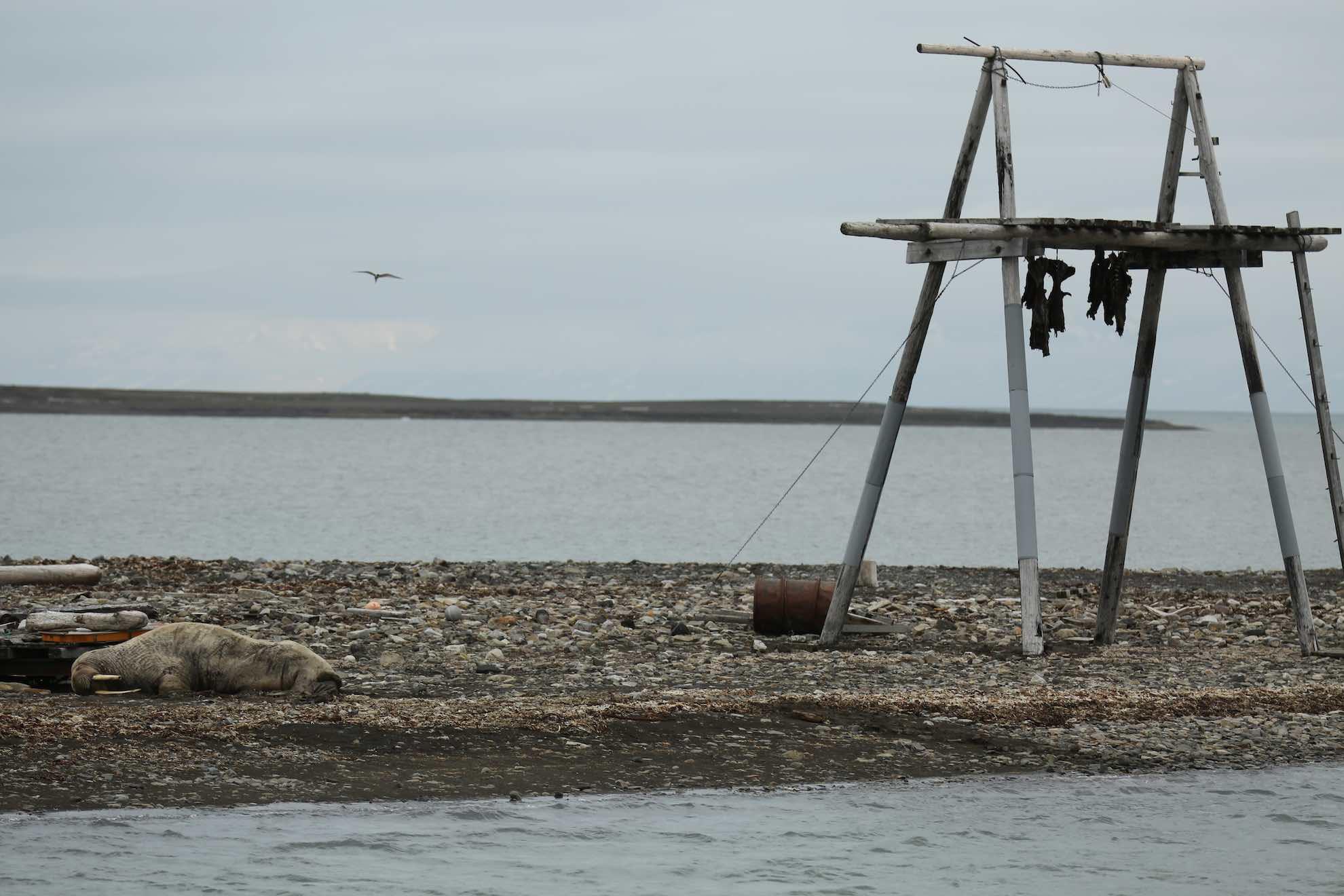 Reste von Robben- und Walfängern.