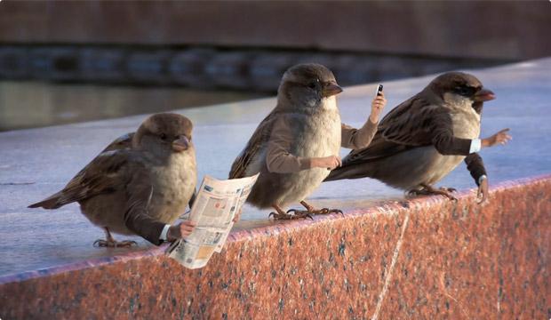 asus-modern-birds-img03.jpg