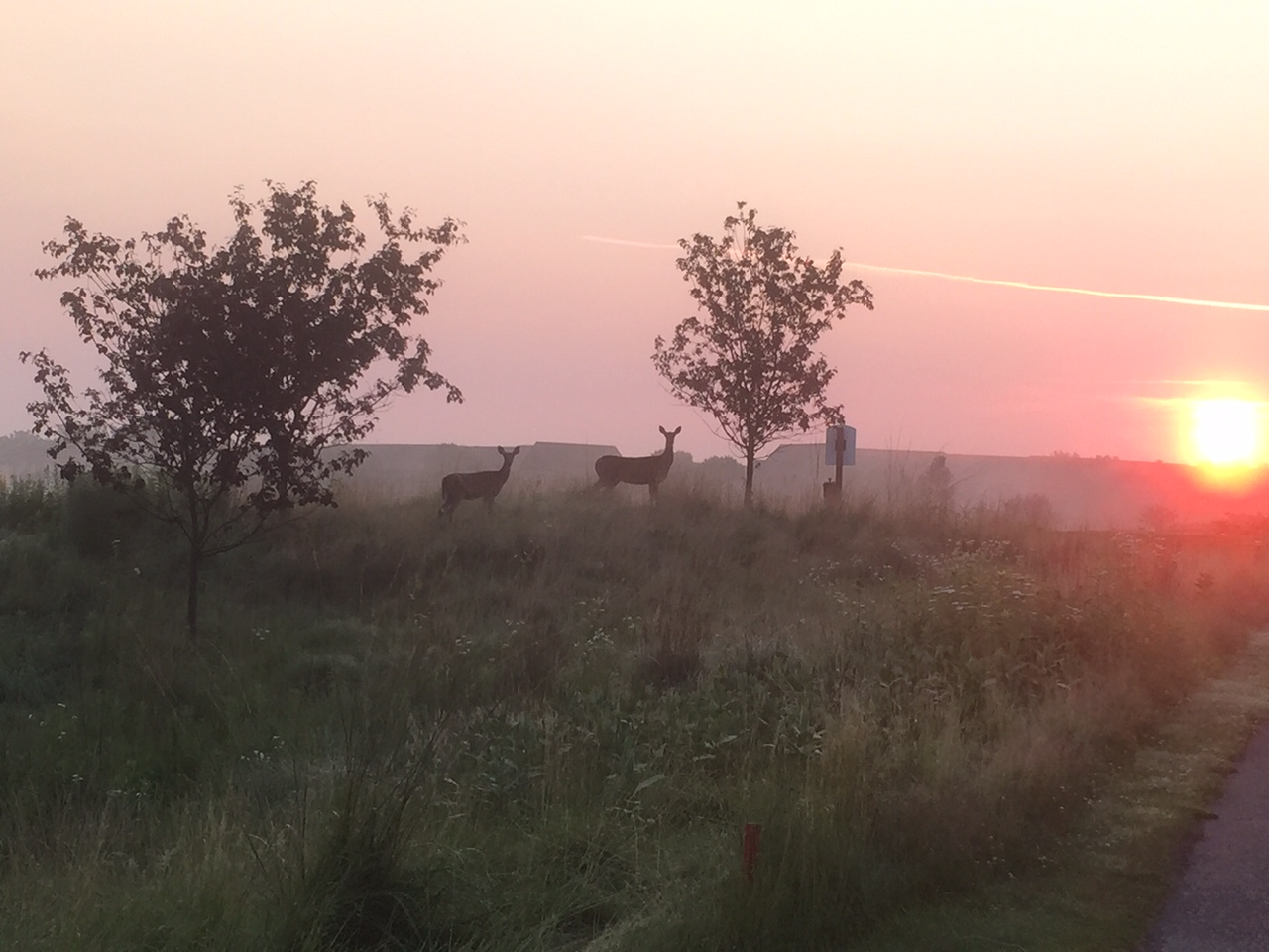 5th tee deer sunrise.JPG