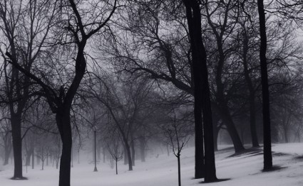winter_trees_201551.jpg