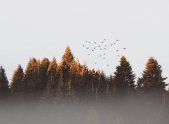 birds-cold-conifer-917494-e1539195572938.jpg