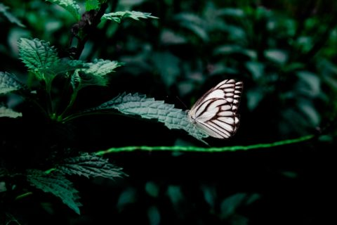 butterfly-close-up-forest-58726-e1523584689824.jpg