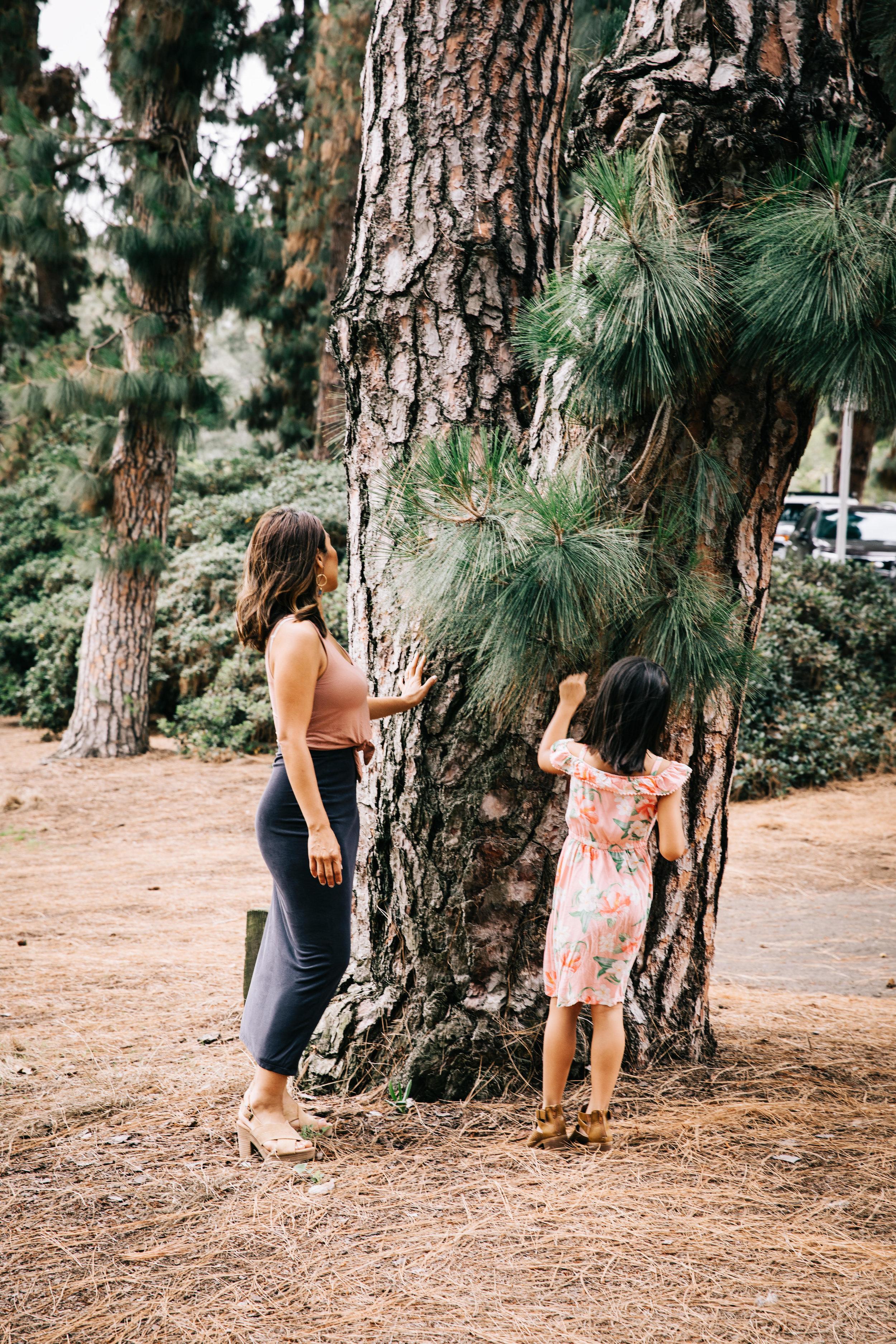WePlant Trees. -
