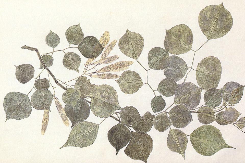 leaves-85752_960_720.jpg