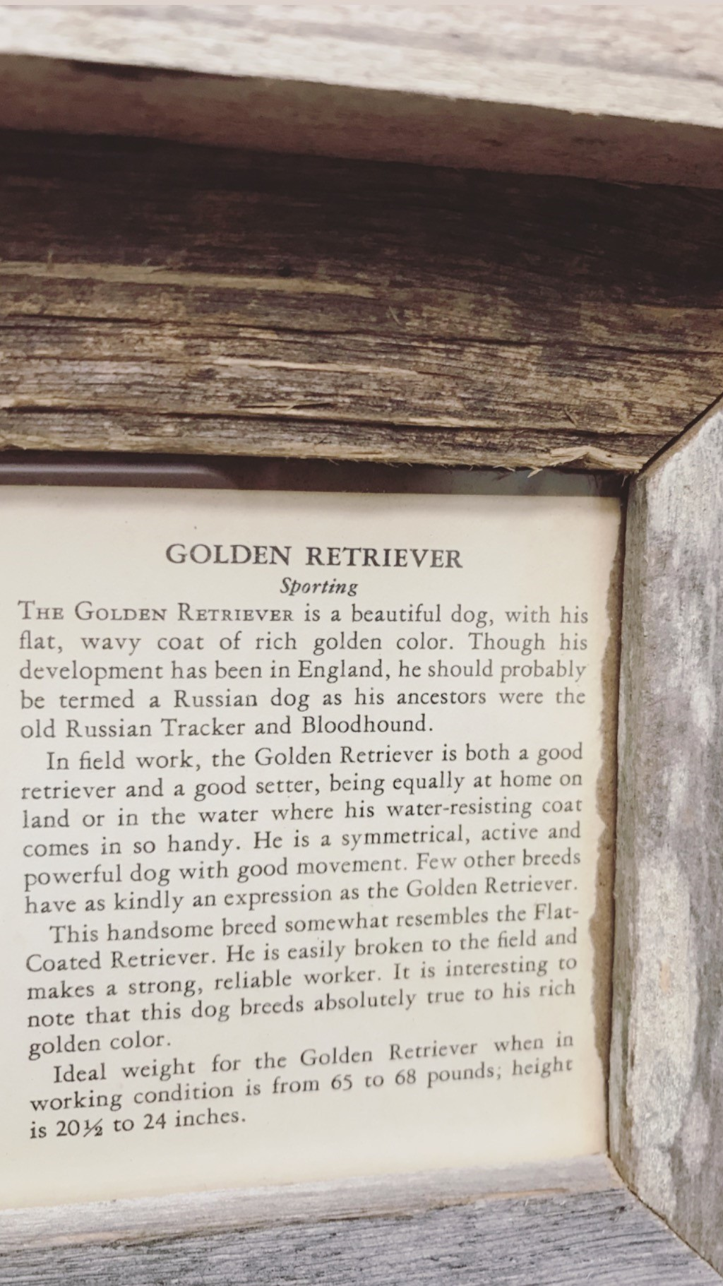 The Golden Retriever is in fact, a beautiful dog. - I love the little history lesson here.