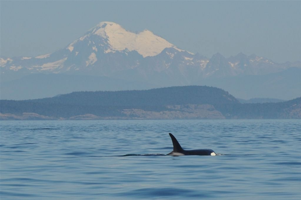 Photo Credit: Eagle Wing Whale Watching Tours