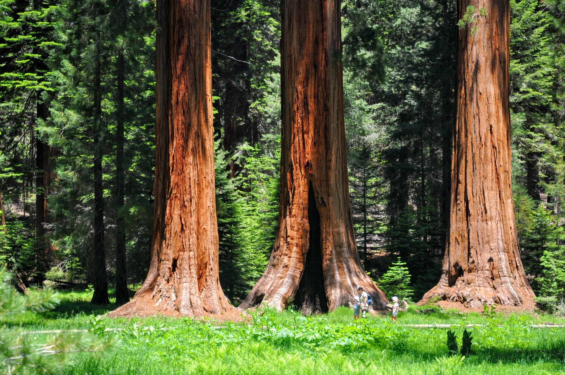 Photo Credit: Buckeye Tree Lodge