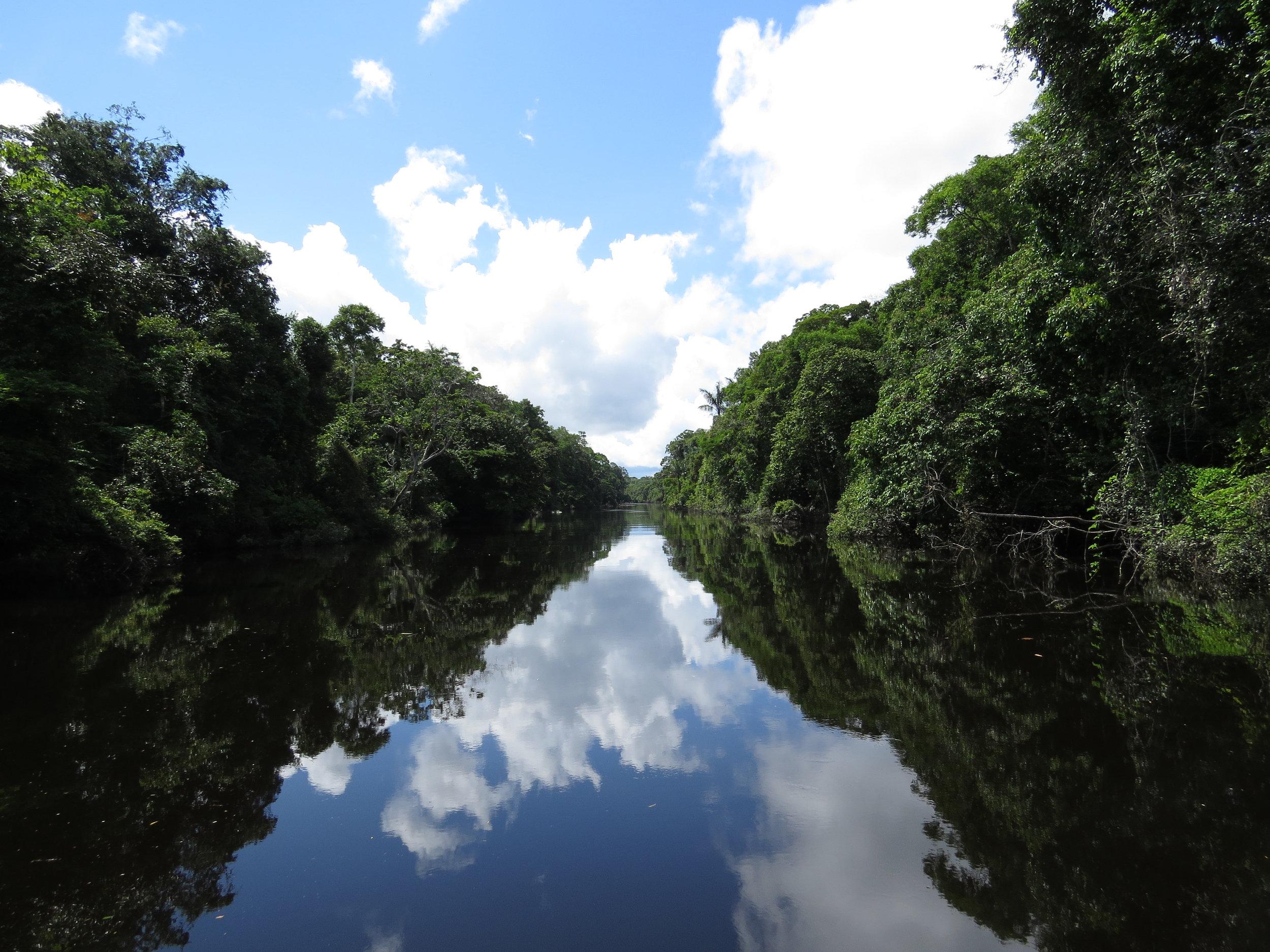 Photo Credit: Rainforest Trust