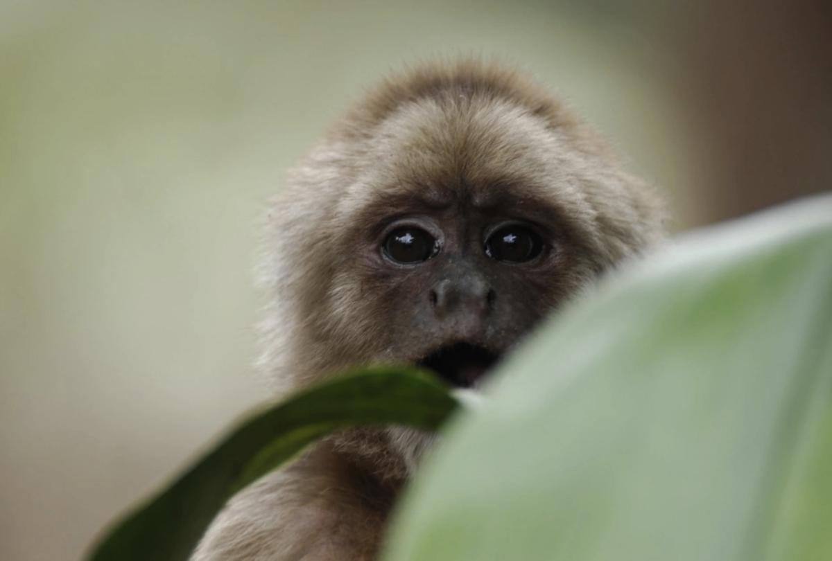 Photo Credit: Murray Cooper (Rainforest Concern)