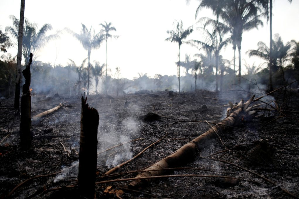 Photo Credit: Bruno Kelly/Reuters (Rainforest Action Network)