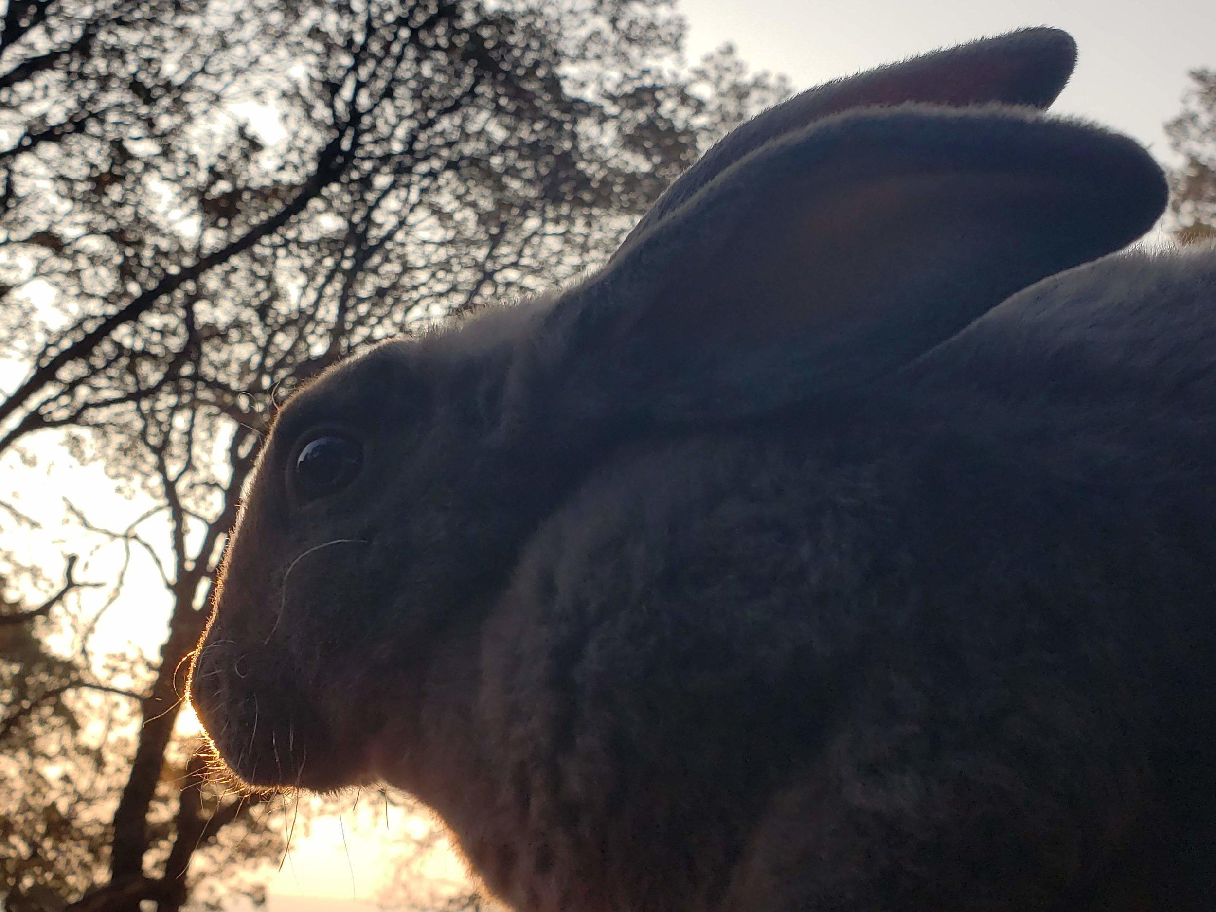 Bunny Foo Foo.jpg