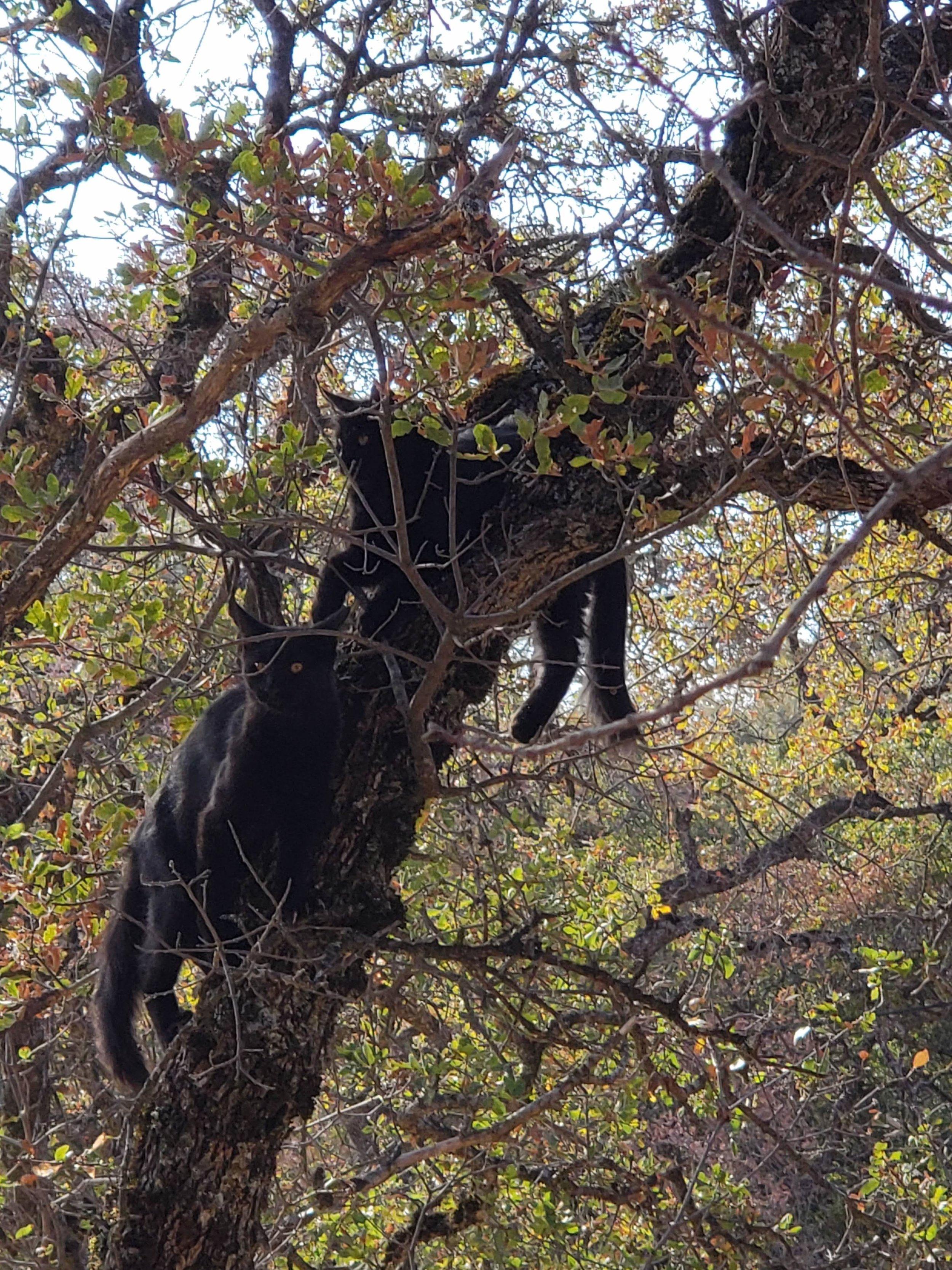 Kitties in Tree.jpg