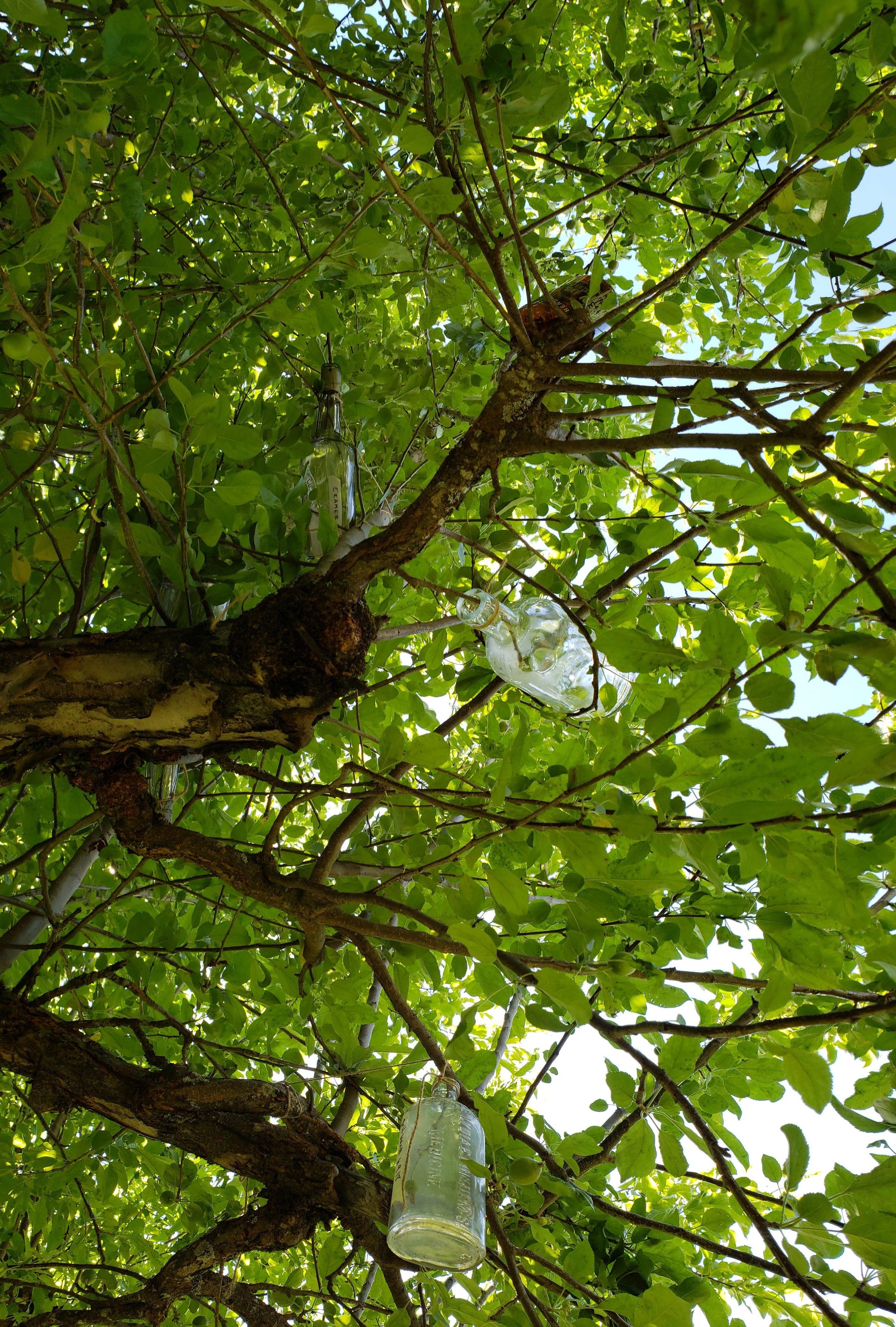 Bottles in Trees.jpg