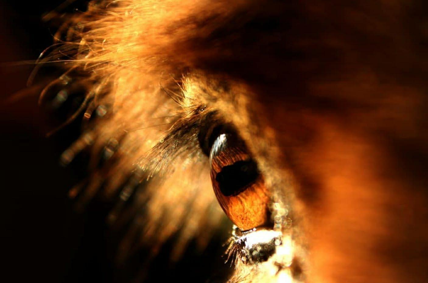 Burro Eye.jpg