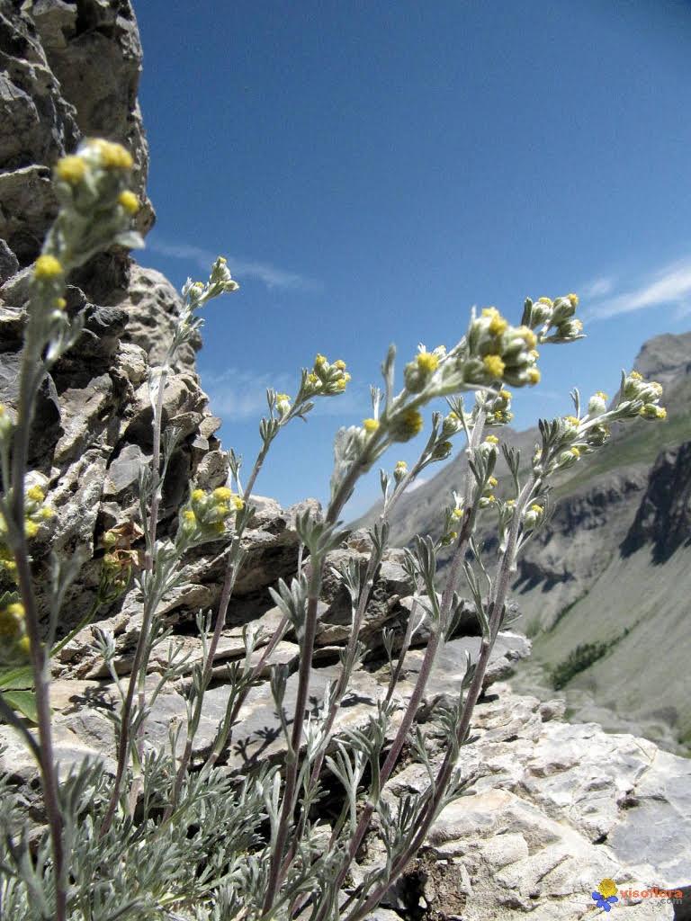 Photo plante pour site.jpg