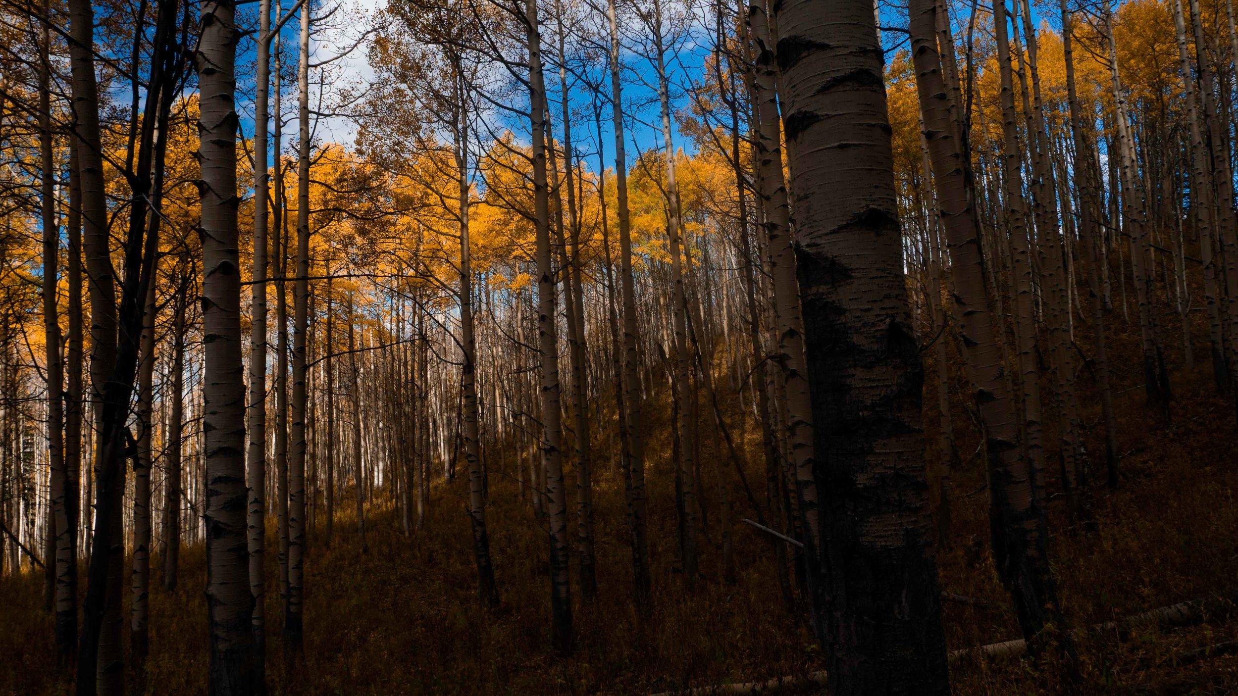 treesshadowto0029.jpg