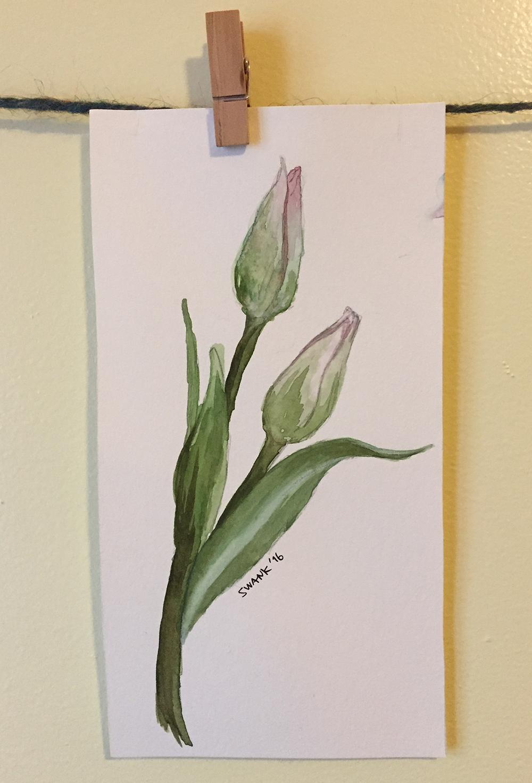 myart-tulips.png