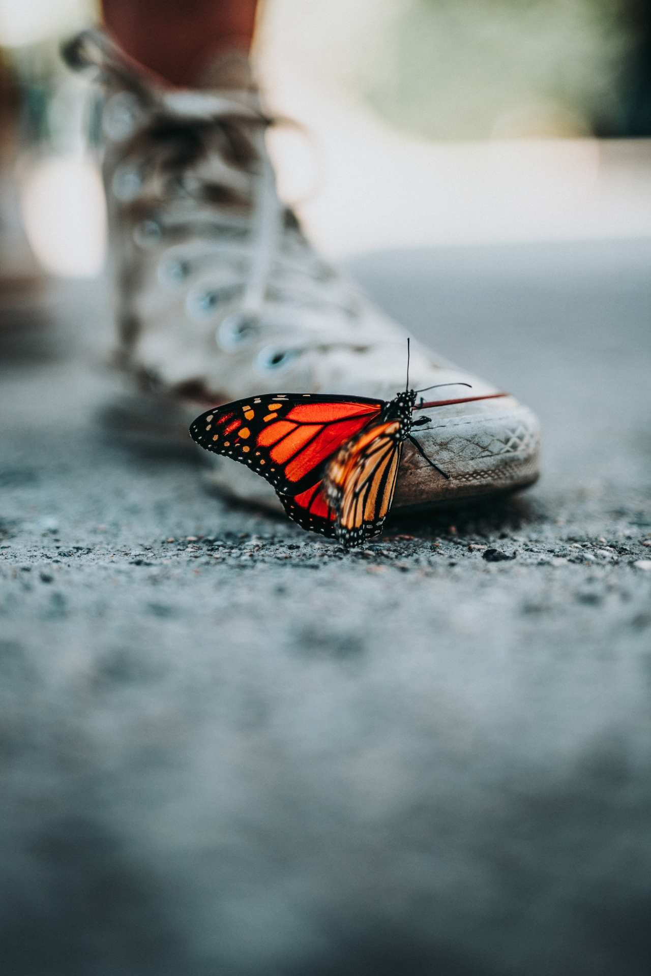 Transform - * Run a sector-leading transformational change programme* Gained board approval for multi-million pound engagement strategies* Embedded highly nuanced financial models* Created lifetime value models that draw money, time and voice into one metric