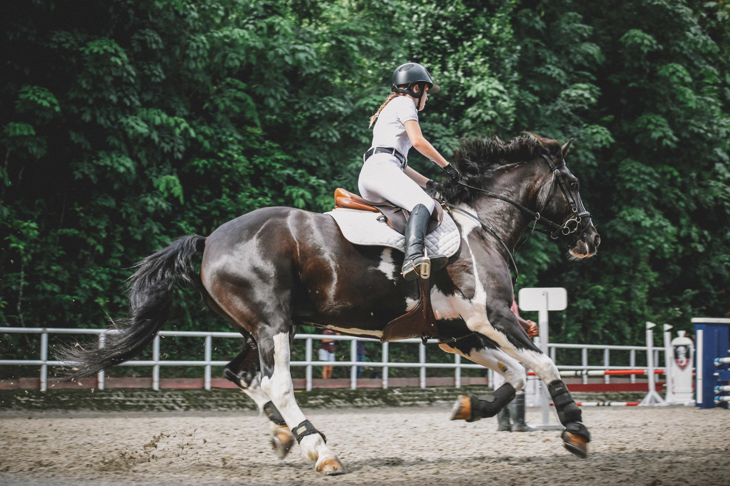 Training & Riding -