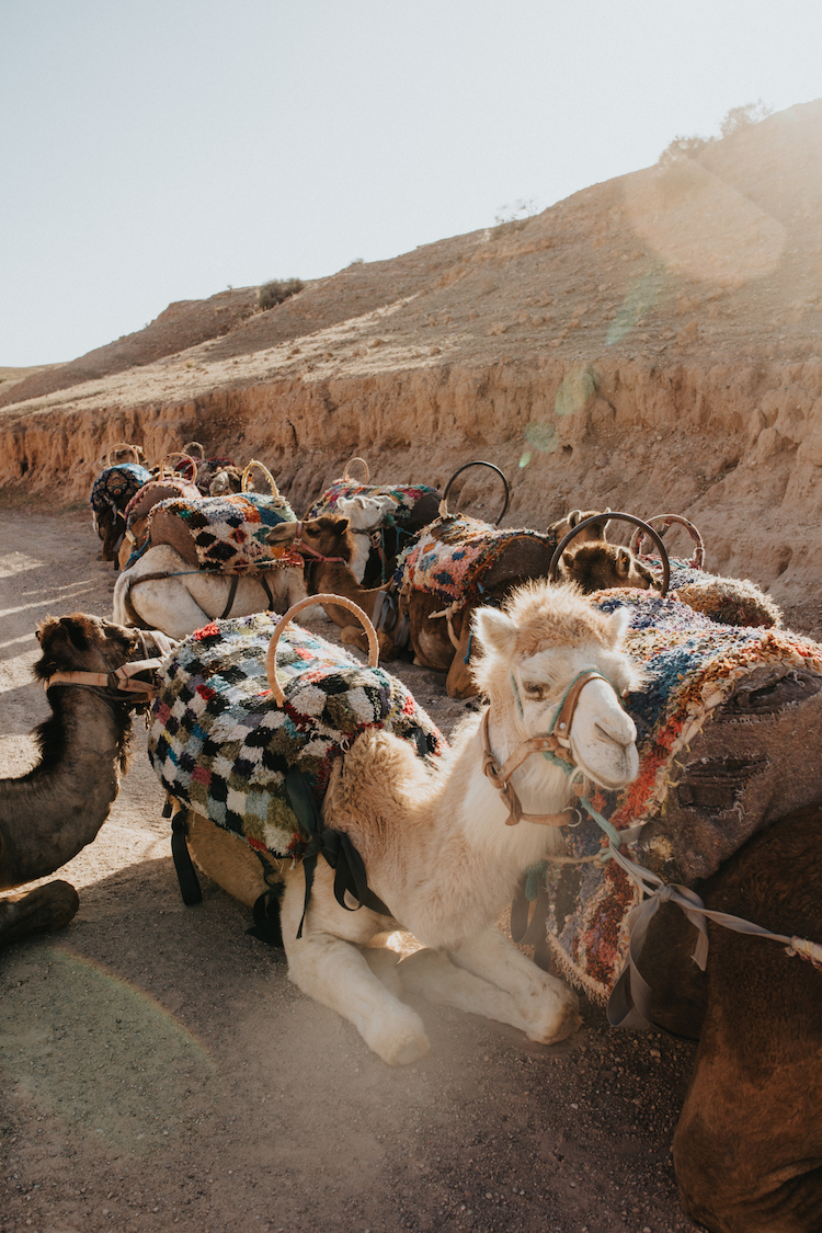 MoroccoxSol837.jpg